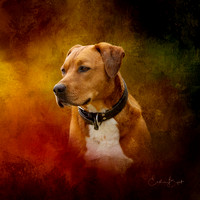 Pet Portrait - Tyrus